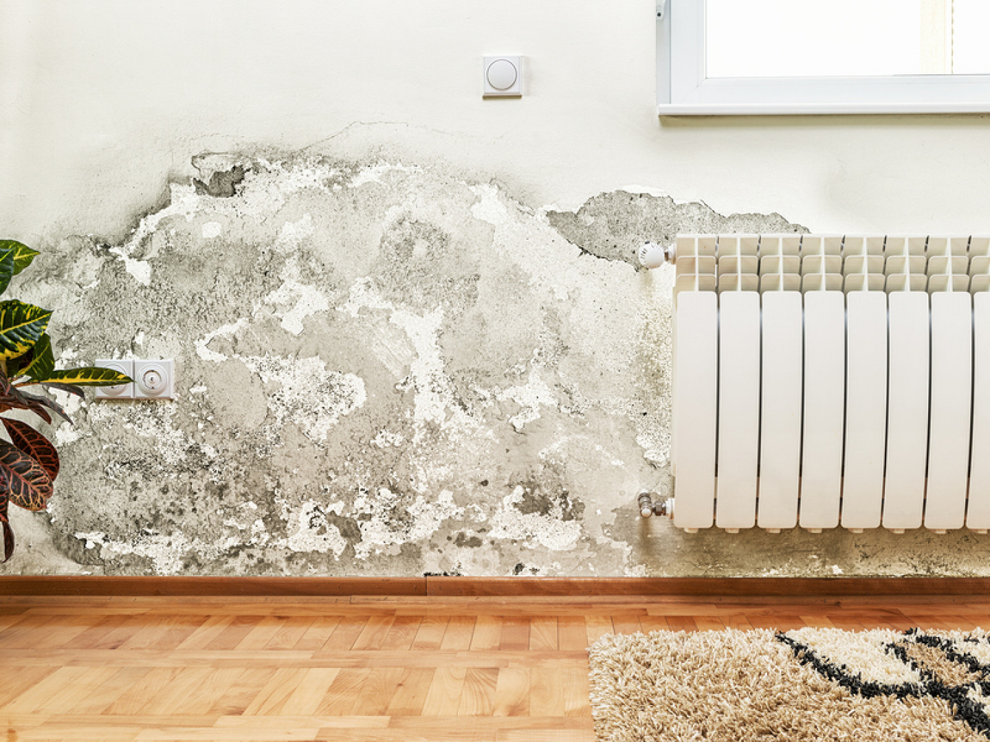 Restore Your Home after Water Damage